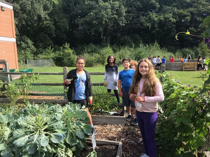 6th graders working in our garden